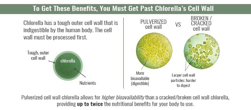 How Well Can You Digest Your Chlorella Supplement Sun